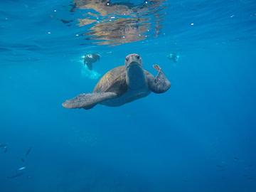 Bild_Schildkroete_Fuerteventura