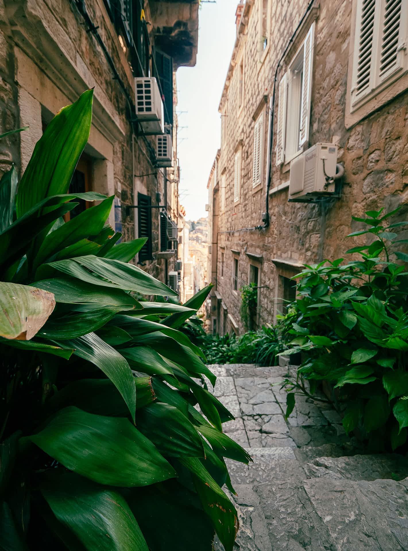 Dubrovnik Gasse 4