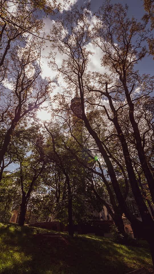 Viel Grün und dennoch nicht zu übersehen - Der Aussichtsturm Petrin